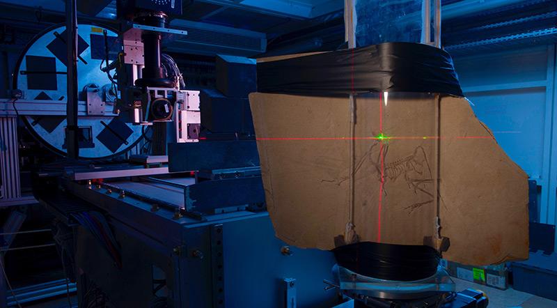 Labor: Fossile Knochen im Computer-Tomographen