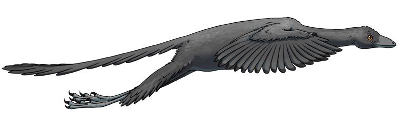 Archaeopteryx im Flug