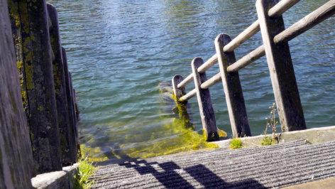 Wiener Wässer  Die alte Donau (3/3)