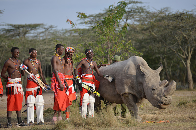 """Maasai posieren mit """"Sudan"""", dem letzten mänlichen Nördlichen Breitmaulnashorn"""