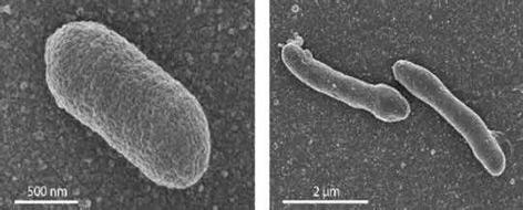 Mikroskopische Bilder von Zellen