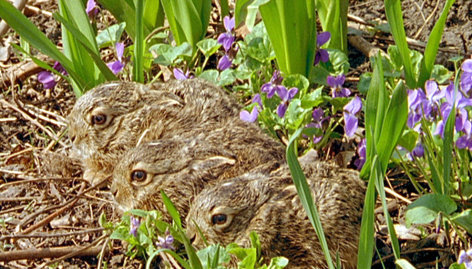 Wilde Heimat - Frühling