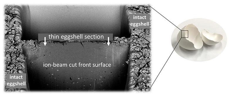 Nanostruktur der Eierschale