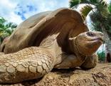 Aldabra - Die Arche Noah der Riesenschildkröten