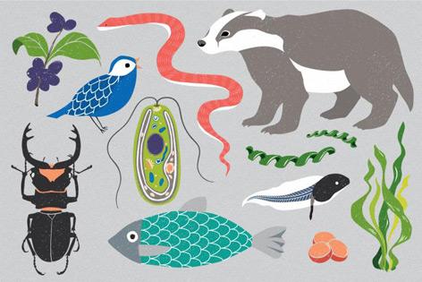 Zeichnung von verschiedenen Arten