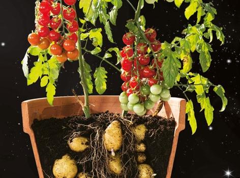 Gemüse des Jahres