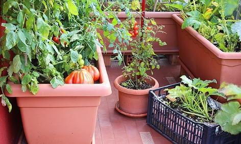 Gemüseanbau am Balkon