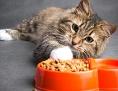 Katze und Trockenfutter