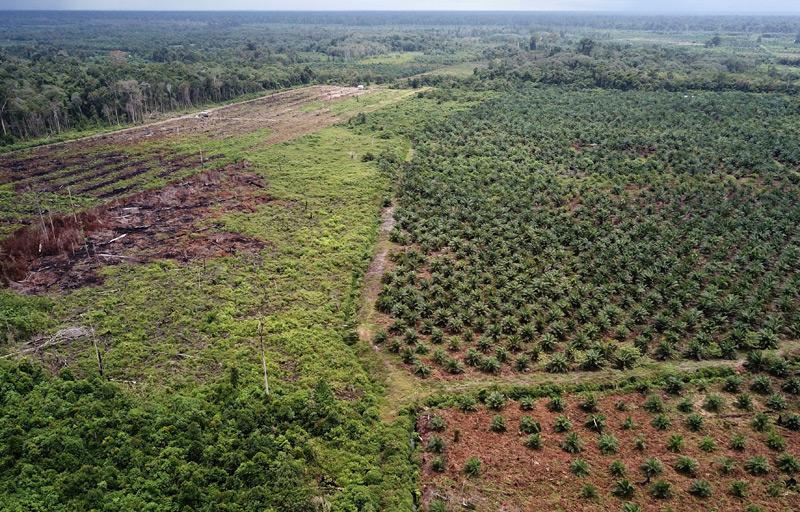 Illegale Palmöl-Plantage in Indonesien