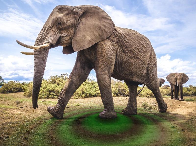 Elefant erzeugt Schwingungen (Visualisierung)