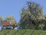 Frühling auf der Alm    Originaltitel: Streifzüge durch den Süden Österreichs