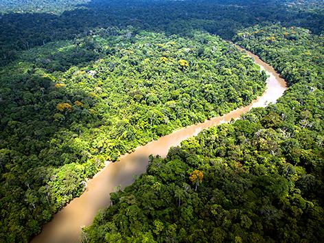 Der Amazonas in Französisch Guyana