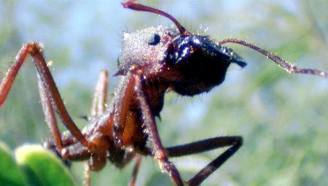 Universum Ameisen - Die heimliche Weltmacht