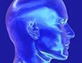 Ein durchsichtiger Schädel vor blauem Hintergrund