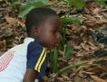 Kind bei Arbeit auf Plantage