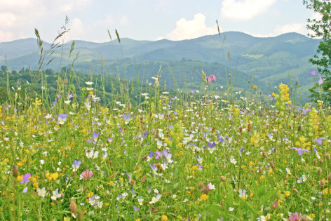 Wilde Heimat - Sommer