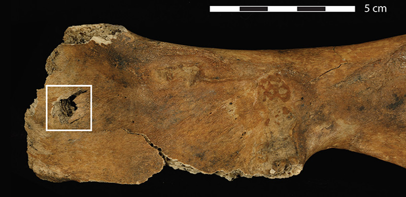 Neandertaler jagten strategisch – science.ORF.at