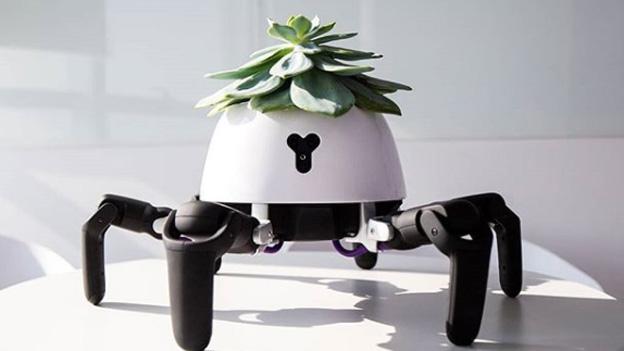 Roboter-Pflanzentopf mit Füßen sucht selbstständig Sonne