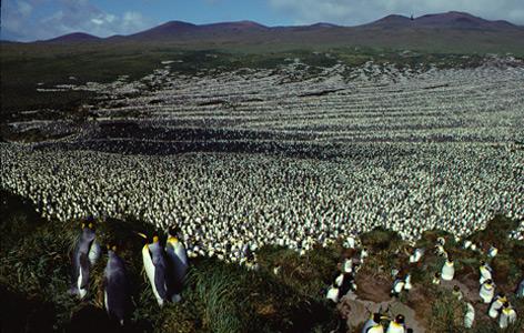 Die Kolonie 1982
