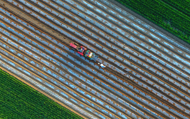 This photo taken in April 2018 shows farmers planting peanuts in a field in Liaocheng in China's eastern Shandong province.