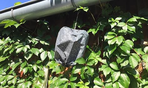 Die Attrappe eines Wespennest hängt an einer Dachrinne