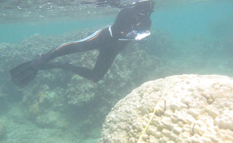 Taucherin vor gebleichter Korallenkolonie