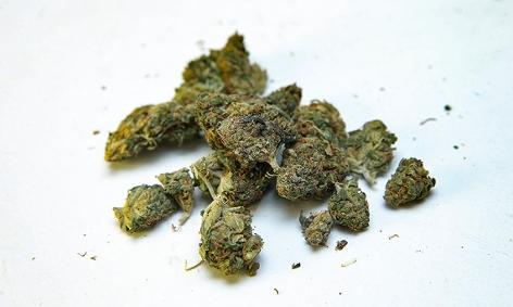 Cannabisblüten auf weißem Hintergrund