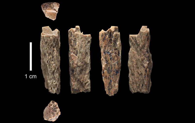 """Die Knochenfragmente (""""Denisova 11"""") wurden 2012 in der Denisova-Höhle in Russland von russischen Archäologen entdeckt"""