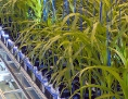 Rhizotron von Pflanzen