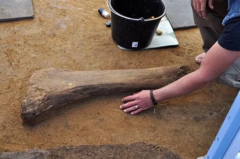 Grabungen altsteinzeitliche Anlage