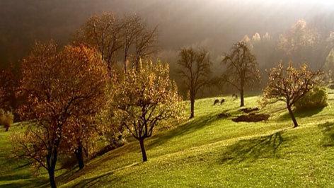 Wilde Heimat Herbst Orf Iii