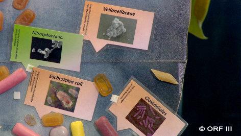 treffpunkt medizin  Die Heinzelmännchen im Darm: Superorgan Mikrobiom