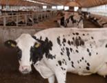 Milch - ein glaubenskrieg