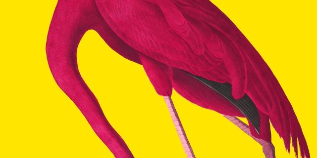 Viennale Flamingo