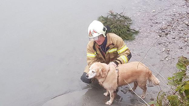 Lebensrettung in der Salzach bei Golling - Hund in Salzach