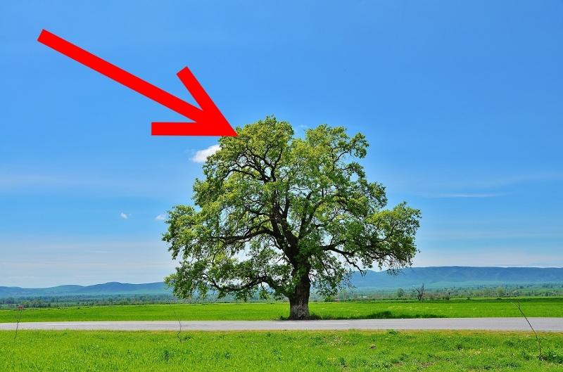 Pfeil zeigt auf Baum