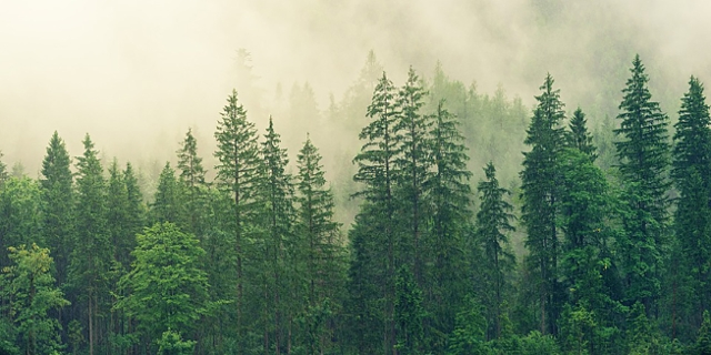 Wald und Nebel
