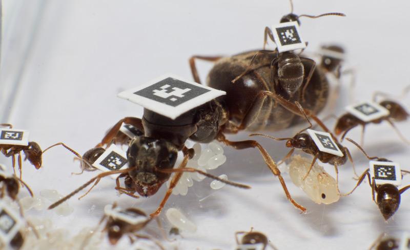 Ameisen mit Tags