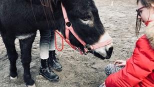 Lesen mit dem Esel – Tiergestütztes Lernen für lernschwache Kinder