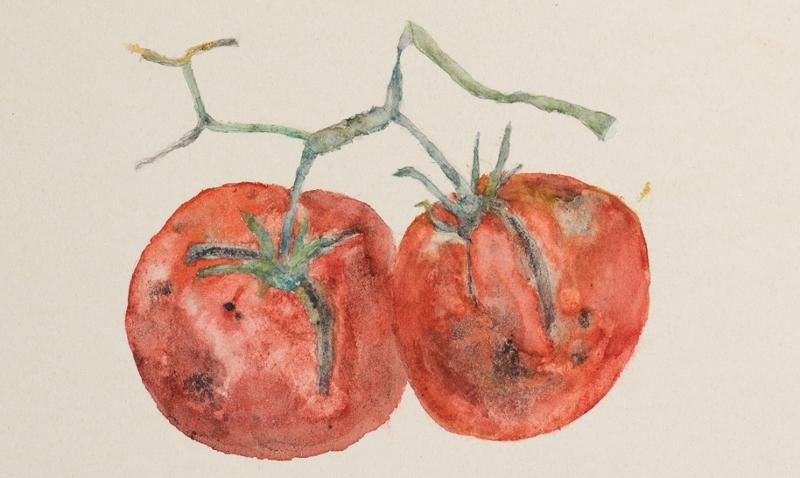 Bild einer Tomatenpflanze