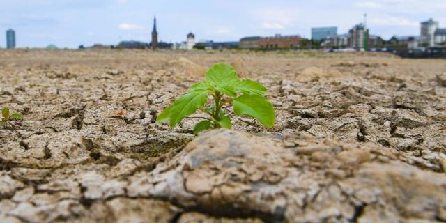 Kleine Pflanze in ausgedörrtem Boden