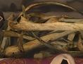 Digitale Rekonstruktion des Reliquienschreins und der darin aufbewahrten Knochen