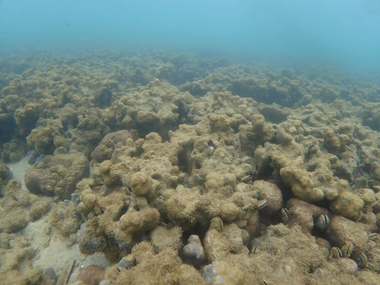 Totes Korallenriff in Japan
