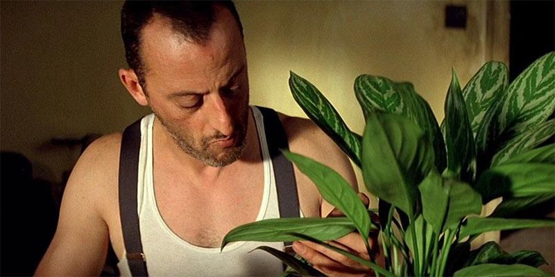 Szene aus Leon der Profi mit Pflanze