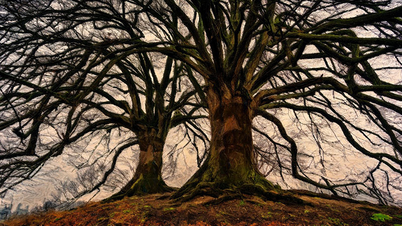 Baumwesen Ent