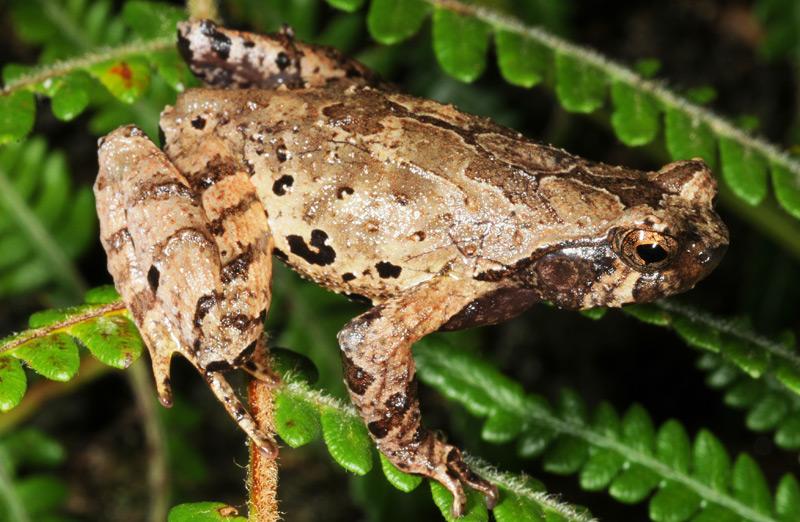 157 neue Arten am Mekong entdeckt