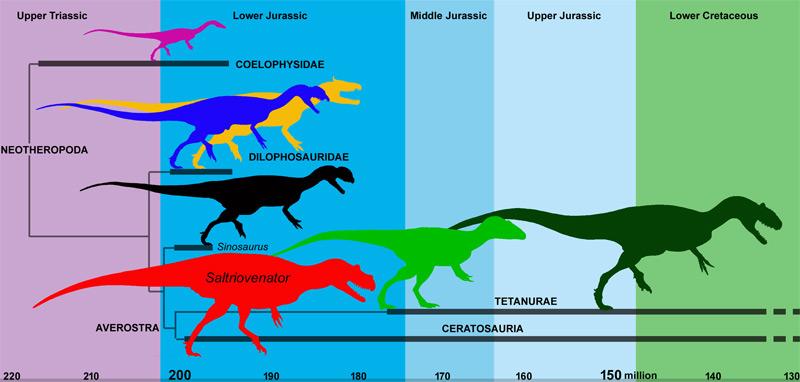 Grafik zur Entwicklung der Theropoden