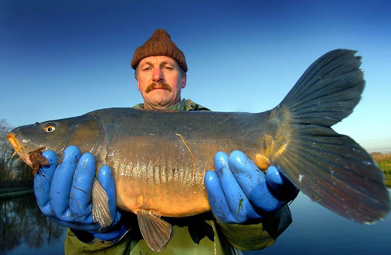 Ein Fischer zeigt einen etwa drei Kilogramm schweren Spiegelkarpfen