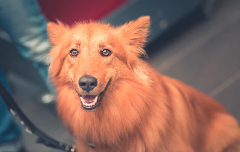 Hunde sind gute Beobachter und sozial lernfähig
