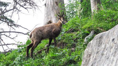 Universum Roseggers Waldheimat - Ein Jahr im Zauberwald